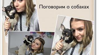 Собака - Плюсы и Минусы / Мой опыт / 1.Часть