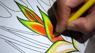 Drawing and coloring - Heliconia flower