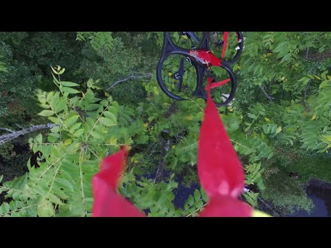 Drone On Drone Rescue Tree Recovery  DJI P3P