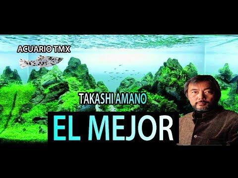 El mejor acuarista (Takashi Amano)🐠ACUARIO TmX