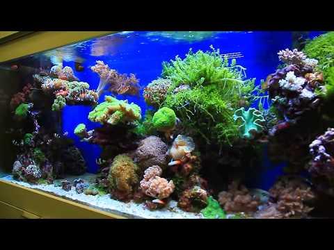 Ещё один морской аквариум