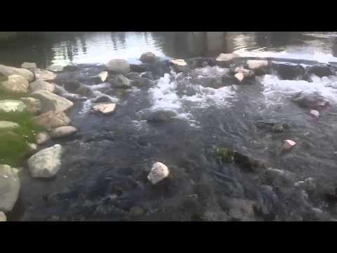 Random Rapids