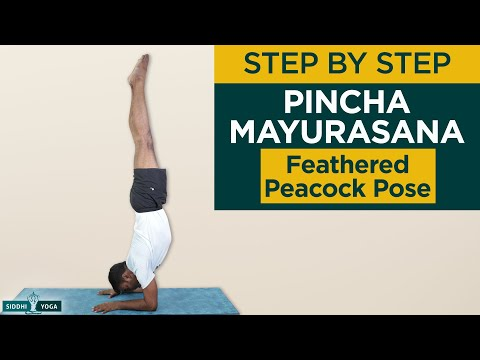 Pincha Mayurasana (Feathered Peacock Pose) Benefits, How to Do by Yogi RiteshSiddhi Yoga