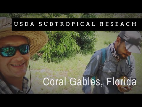 USDA Subtropical Research Tour: Historic Microclimate Fruit Walls