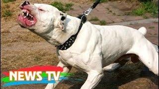 Lý giải nguyên nhân chó nhà nuôi tấn công chủ dã man