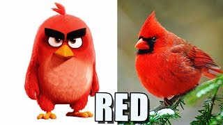 🐦 Angry Birds in Real Life 🐦
