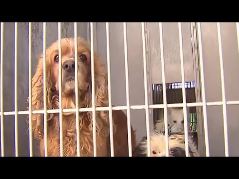 New California Law Says Pet Stores Can Only Sell Rescued Dogs, Cats And Rabbits | NBC Nightly News