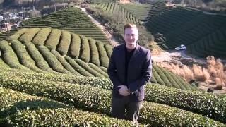 NORDQVIST from Finland visit Organic matcha tea garden in Uji, Kyoto.
