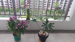 필리핀 나의 정원 꽃 베란다정원 발코니 정원 화분