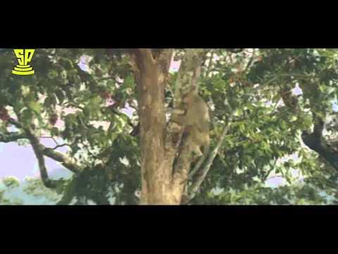 Monkey's Batch Comedy With DivyaBharathi | Bobbili Raja