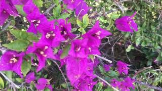 Benden Sana Cover ~ Nil Karaibrahimgil Video