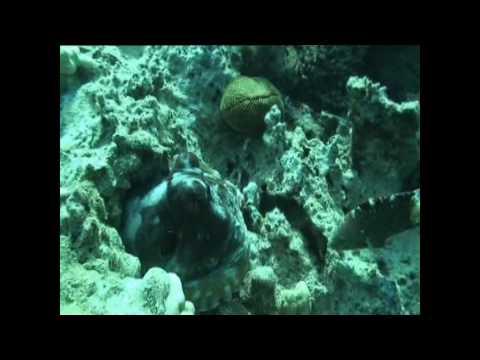 Makadi bay Mer rouge Egypte