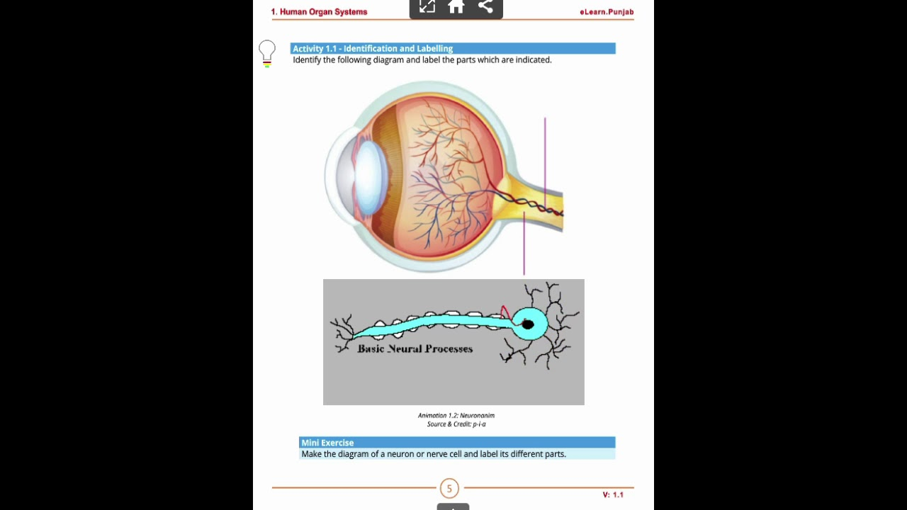 Human nervous system in urdu youtube human nervous system in urdu ccuart Gallery
