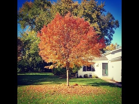 Tree Changing Seasons Youtube