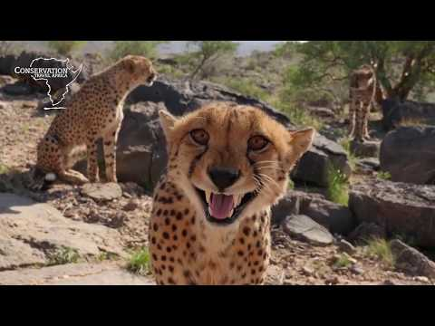 Carnivore Conservation in Namibia