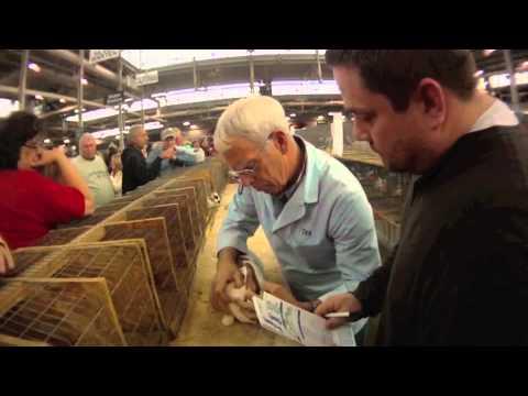 2011 ARBA Convention - World's Largest Rabbit Show