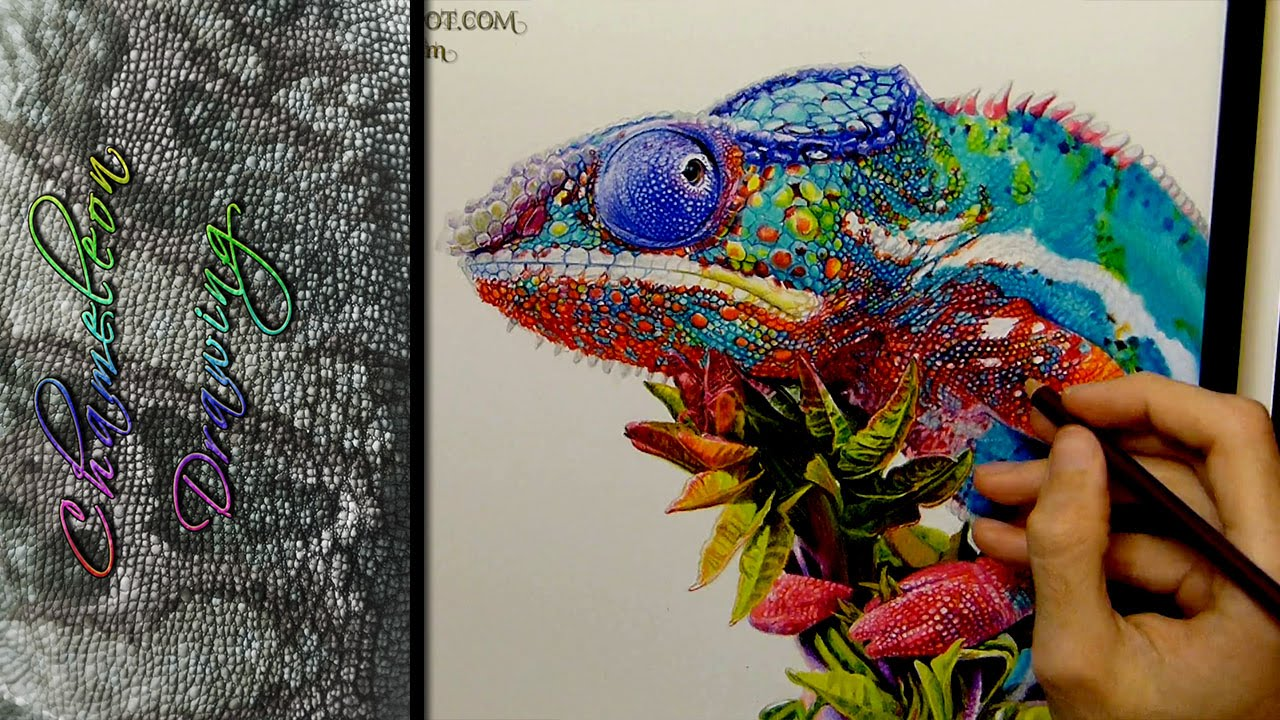 Chameleon Drawing Realistic - YouTube
