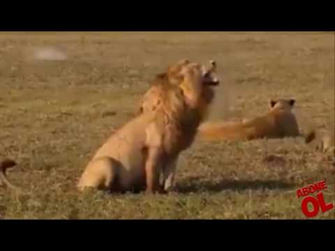 Hayvanlara Komik Dublaj Yaparken Koptum Tayfun Yılmaz&Diğerleri