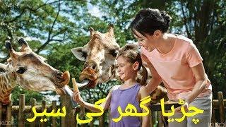 Zoo || Islamabad Zoo || Animals zoo || چڑیا گھر || zoo animals || AnwarAli 4U