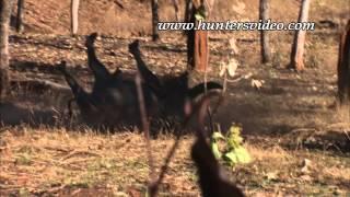 Jagd auf australische Wasserbüffel - Hunters Video
