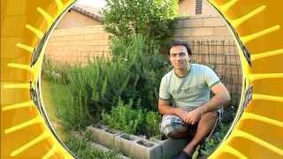 Easy How to Grow a Herb Garden: Basil Oregano Rosemary Thyme Sage