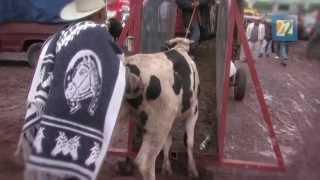 Canal 22. Instinto Animal. Un día en el purgatorio. Reportaje: El mercado de San Bernabé
