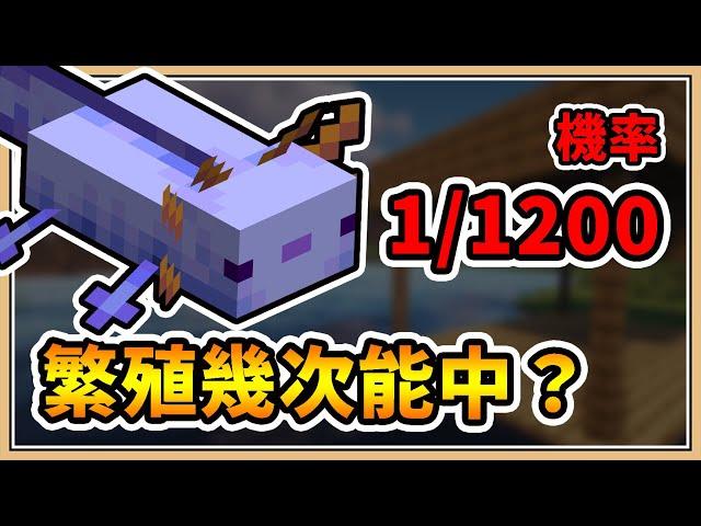 【Minecraft 1.17.1】機率只有1/1200 🔥我能繁殖出「色違鈍口螈」嗎?【鬼鬼】直播精華