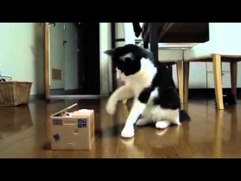 horúce mačička trubice
