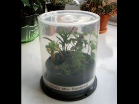 Upcycling A CD Spindle Case Into A Plant Propagator