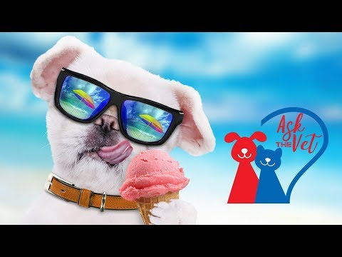 Ask the Vet: Should I let my dog eat ice-cream