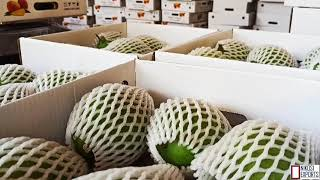 World best|| Top Mango || Farm Fresh Mango Packing for Exports to Canada|| NIKOSI EXPORTS||