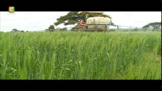 Smart Farm: Wheat Farming in Narok County
