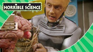 Horrible Science - Professor McTaggart & Bob Moments | Science for Kids
