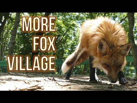 Japan's Fox Village (Extra videos)