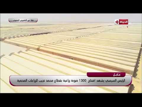 جولة كاملة تفقدية لمشروع صوبة زراعية بقطاع محمد نجيب