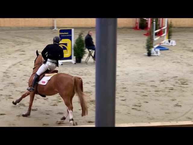 Stallion by El Torrero Du Muse X Nabab De Reve  b.2014