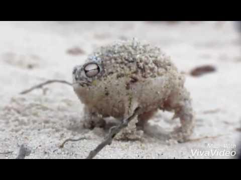 лягушка — новые прикольные фото, анекдоты, видео, посты на