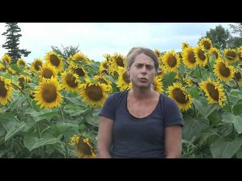 Oilseeds- Agronomic Aspects
