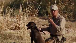 Teaching A Labrador Retriever Part 3