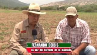 Perfil Agropecuario Domingo 21 Mayo (Control Biológico en Maíz y Sorgo)