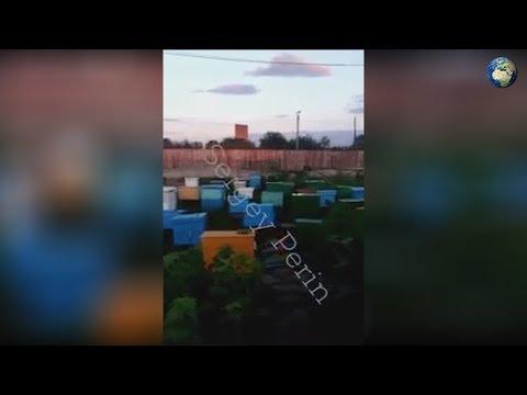 Новое видео о жизни Цеповяза в амурской колонии