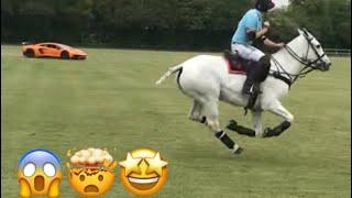 POLO HORSE VS LAMBORGHINI
