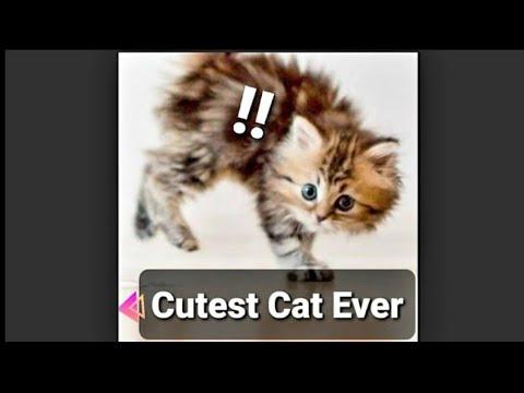 Cat best compilation ever ! 🐈🐱🐱🐾