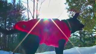 Aussie Naturals Reversible Dog Jacket