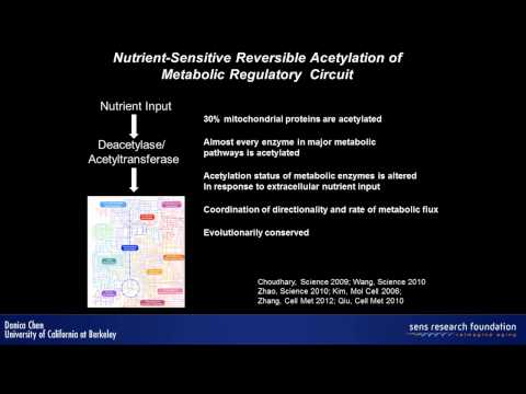 Sirtuin regulation of metabolism and stem cells - Danica Chen
