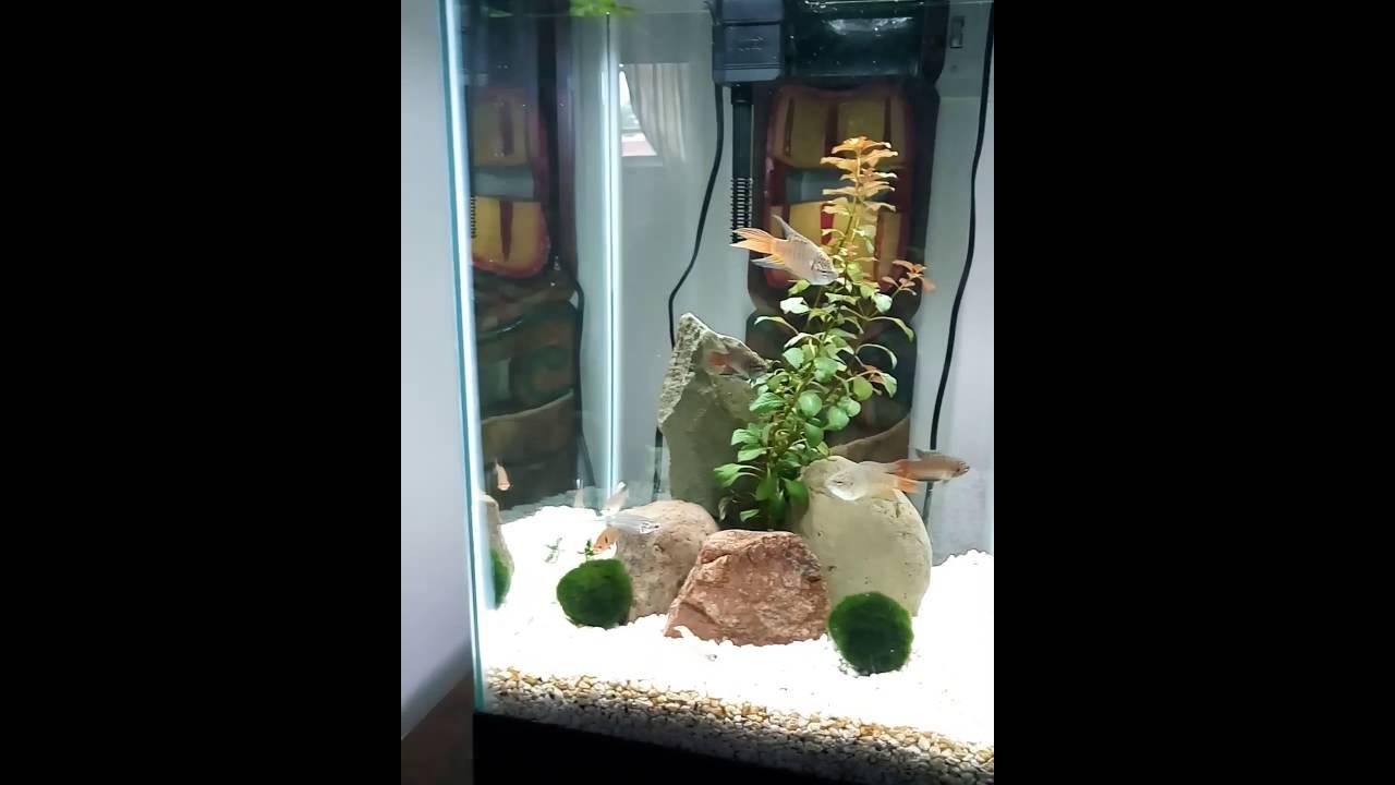 15 gallon column aquarium aquascape planted fish tank part for 15 gallon fish tank