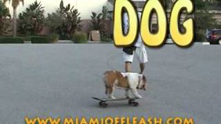 Train Yout Dog To Skateboard With Omar Von Müller