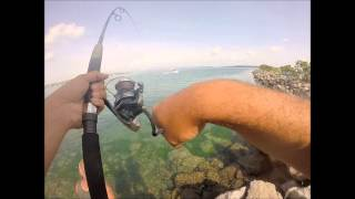 Land based lure fishing for Kingfish