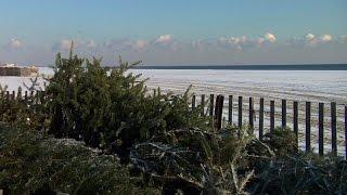 Christmas Trees Help Replenish Bradley Beach Dunes