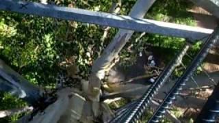 Outback Australia Gloucester Tree Climb Pemberton WA